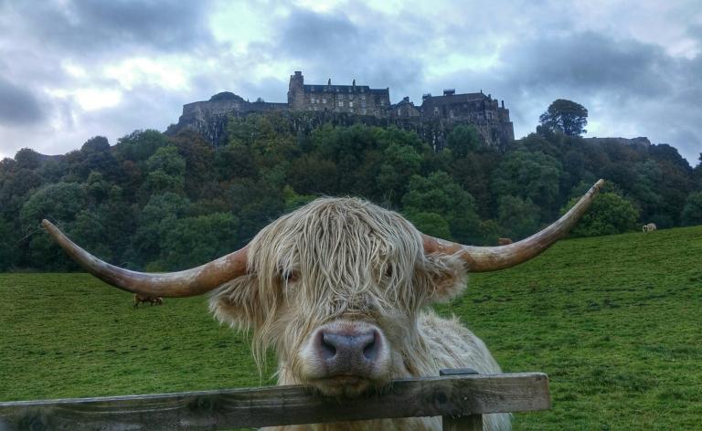 Stirling Castle.jpeg